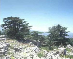 Cedars of Tannourine, North Lebanon