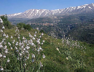 lebanon_nature2.jpg
