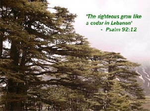Cedars of the Lord